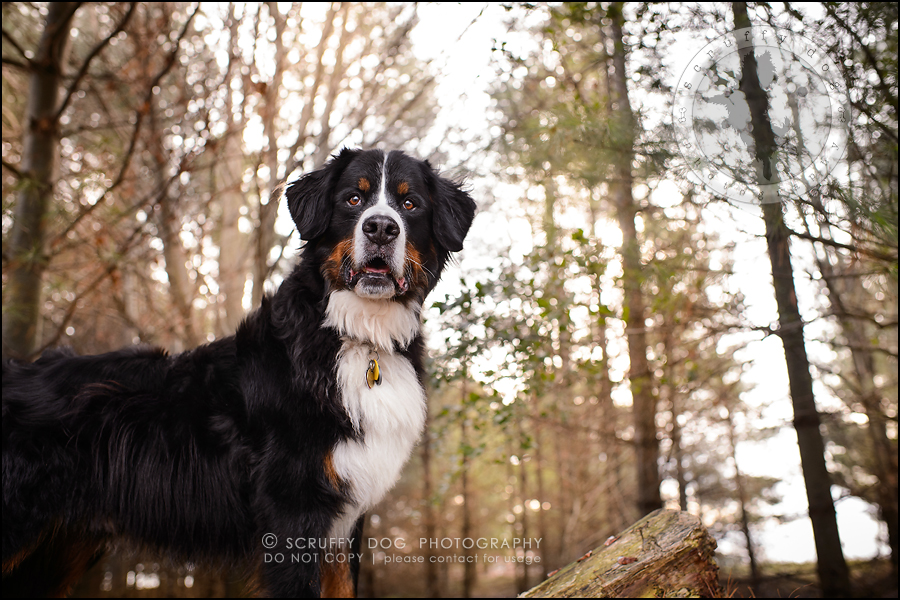 29-toronto-ontario-professional-dog-photographer-henry martha-462