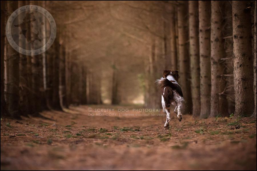 29-toronto-ontario-professional-pet-dog-photographer-jake boucher-797