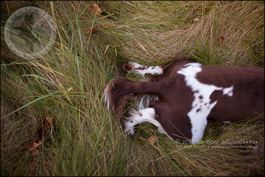 30-toronto-ontario-professional-pet-dog-photographer-jake boucher-237