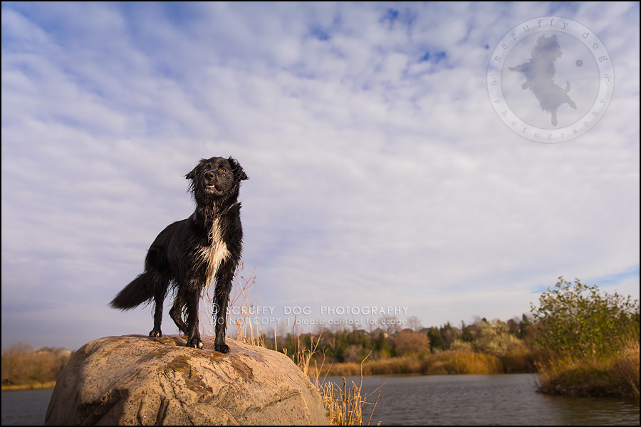 30-waterloo-ontario-professional-dog-photographer-hudson manning-1023