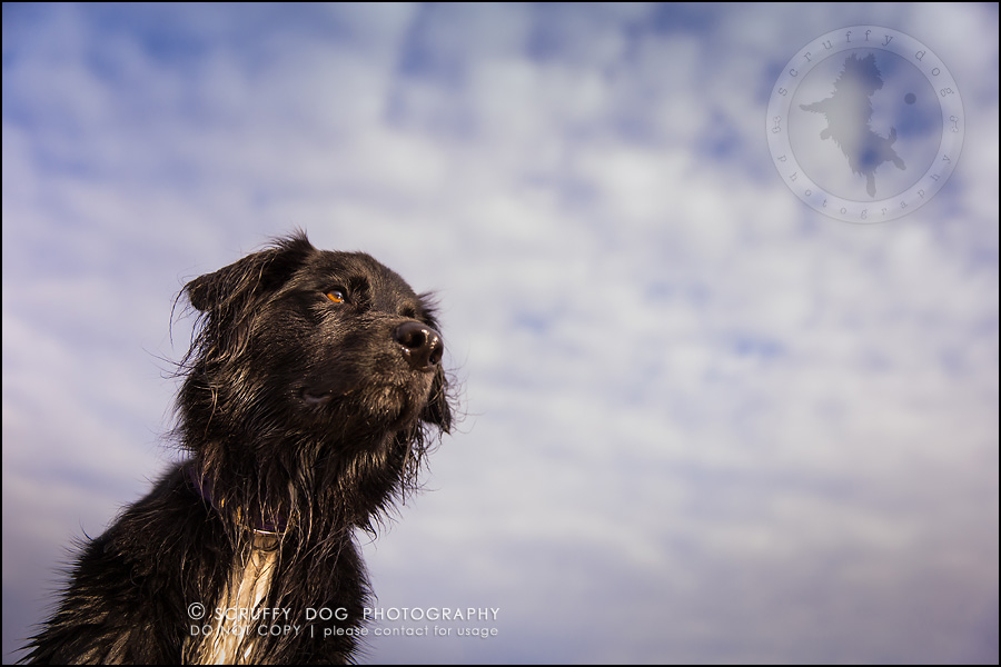 32-waterloo-ontario-professional-dog-photographer-hudson manning-1039