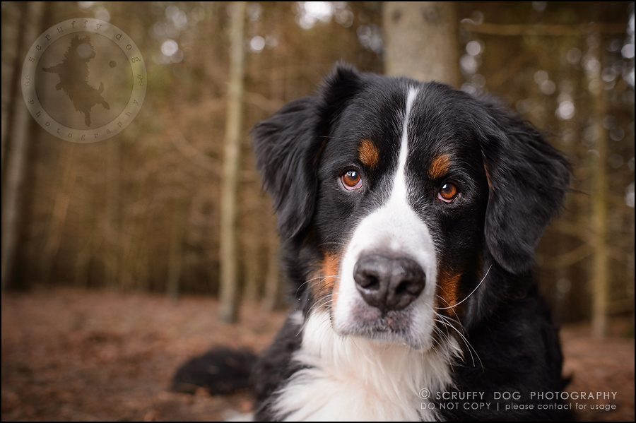 34-toronto-ontario-professional-dog-photographer-henry martha-553