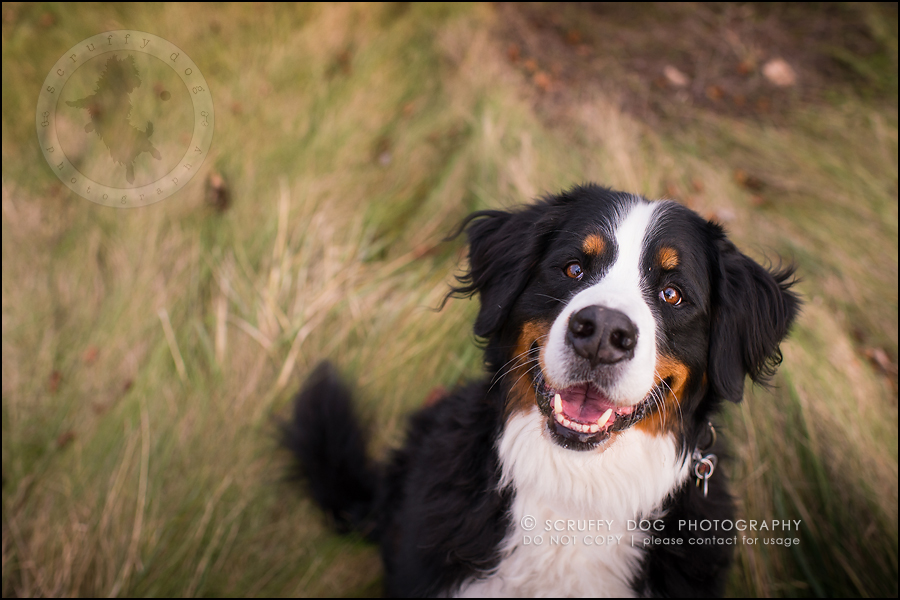 35-toronto-ontario-professional-dog-photographer-henry martha-631