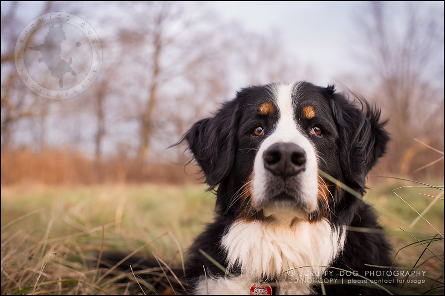 37-toronto-ontario-professional-dog-photographer-henry martha-661