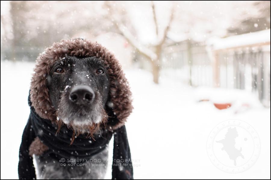01 ontario best pet photographer hat scarf-8-2