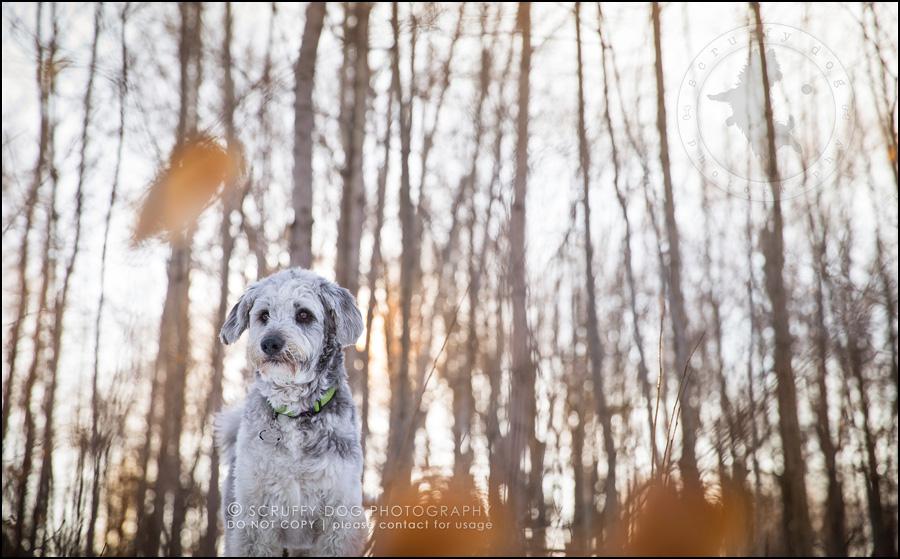 03 ontario best pet photographer lucas dimilta-580