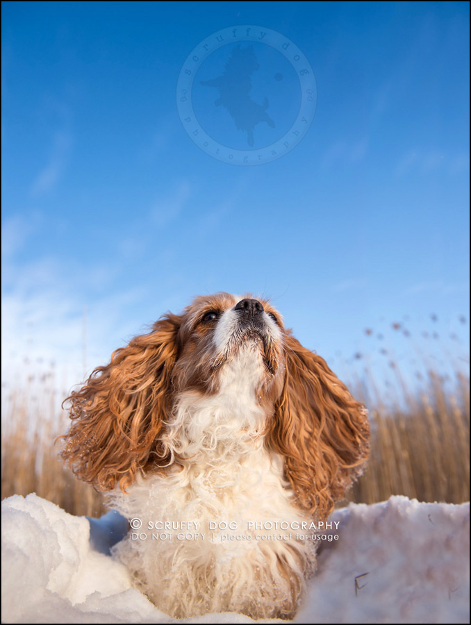 04 ontario best pet photographer masi theroux-672-Edit