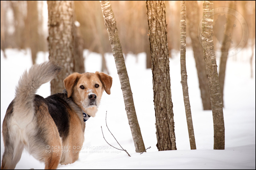 05 ontario best pet photographer rusty yan-26-2-Edit