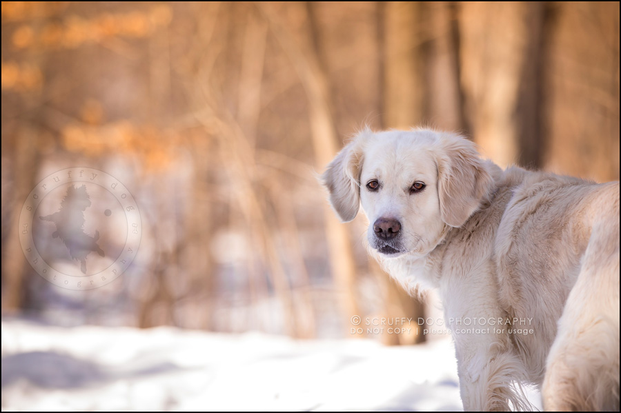 07 ontario best pet photographer haley penny enright-27