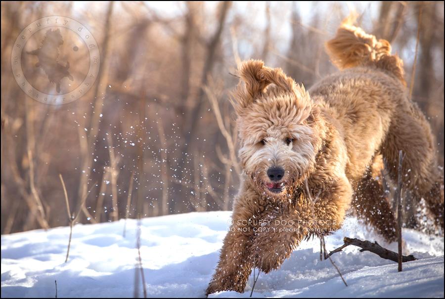08 ontario best pet photographer amadeus wilcox II-125