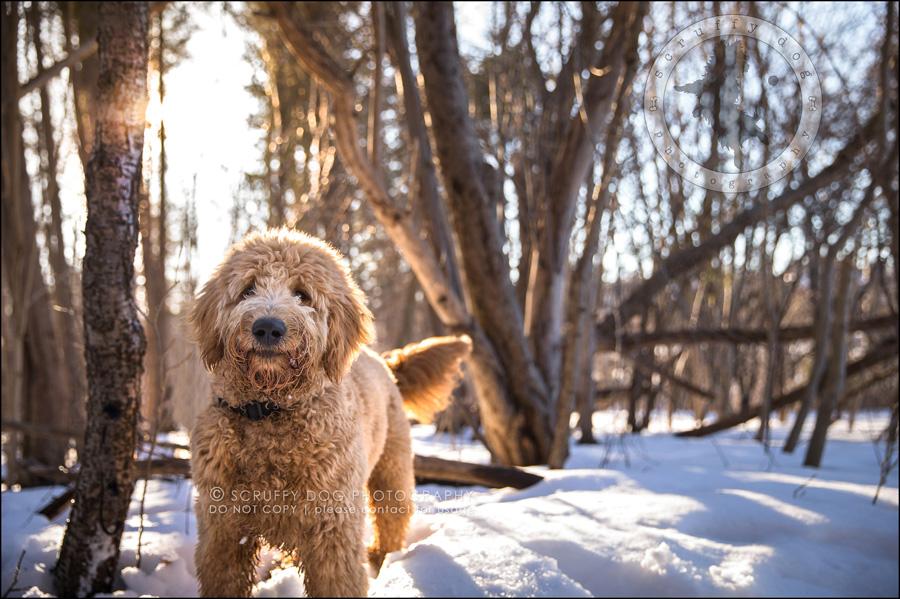 09 ontario best pet photographer amadeus wilcox II-395