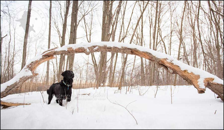 10 ontario best pet photographer wally witzel-521-Edit