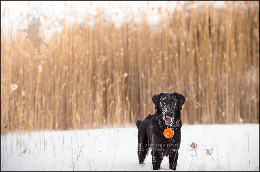 12 ontario best pet photographer wally witzel-607