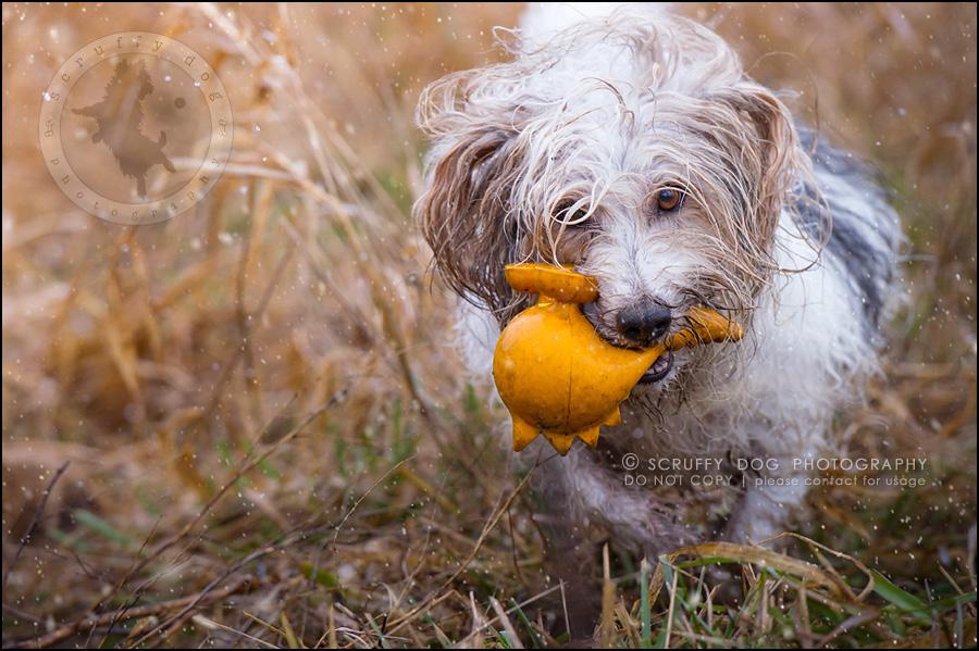 14 ontario best pet photographer Dec hike 2014-75