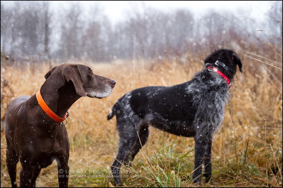15 ontario best pet photographer Dec hike 2014-85-Edit