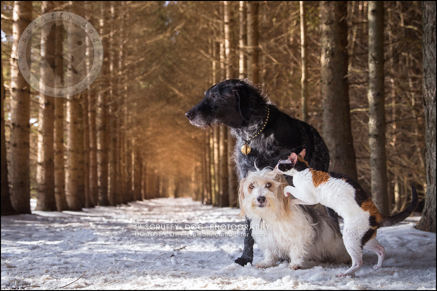 2 ontario best pet photographer my pack-13-Edit