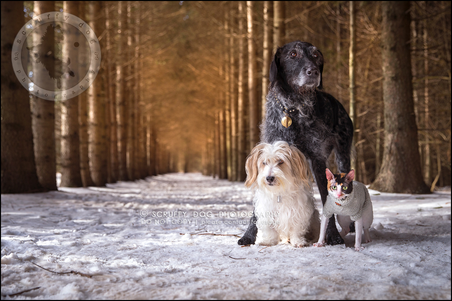 5 ontario best pet photographer my pack-123-Edit