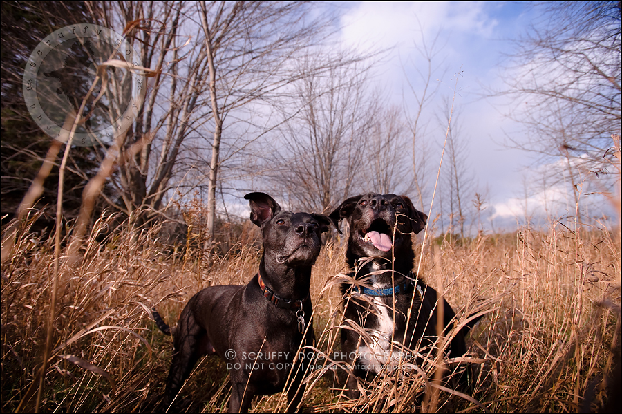 02 ontario stock pet photographer bisou and scout-33