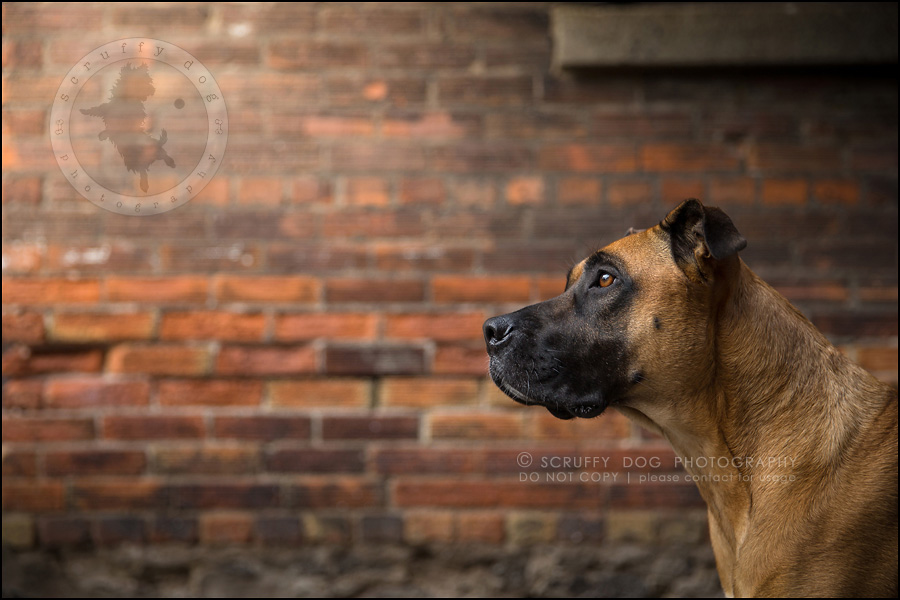 03 ontario premier commercial dog photographer kai mcintosh-13