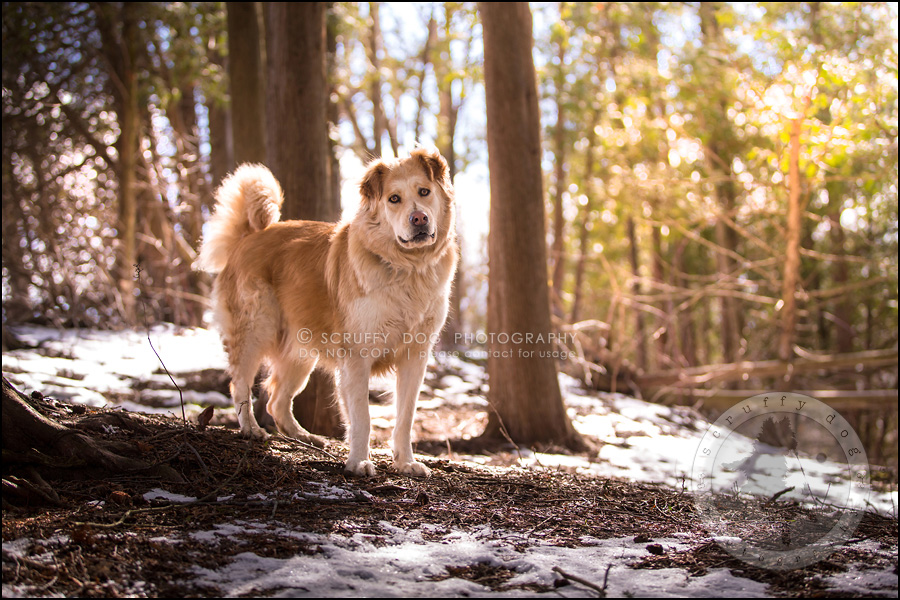 03 toronto modern dog photographer ginger perry-255