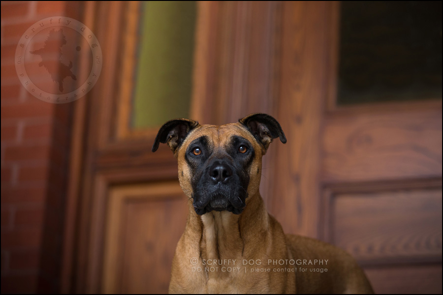 05 ontario premier commercial dog photographer kai mcintosh-429