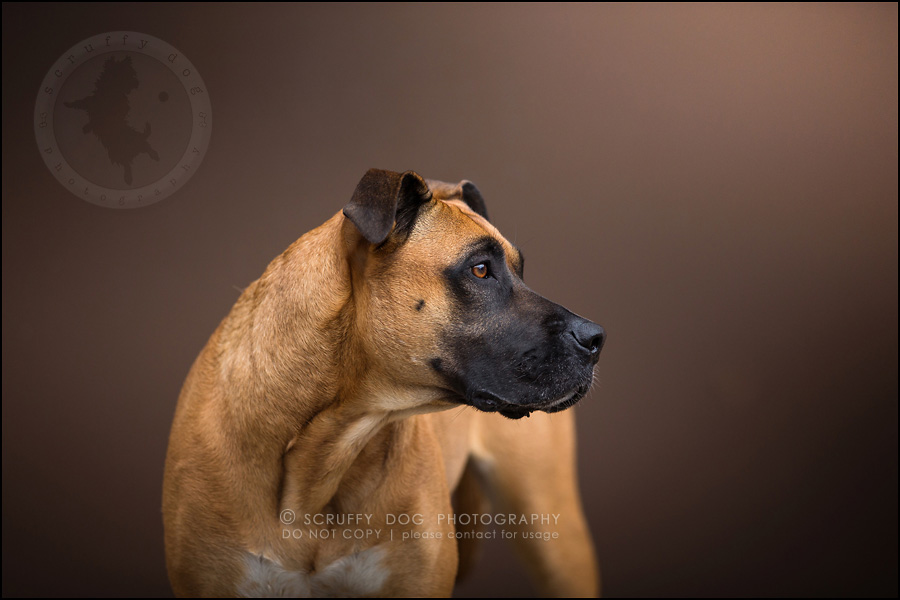 06 ontario premier commercial dog photographer kai mcintosh-294