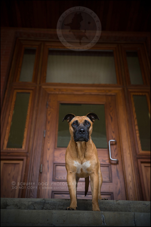 07 ontario premier commercial dog photographer kai mcintosh-273