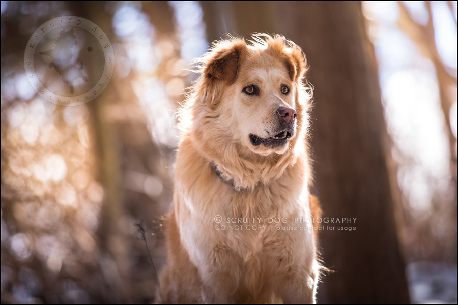 10 toronto modern dog photographer ginger perry-278-Edit