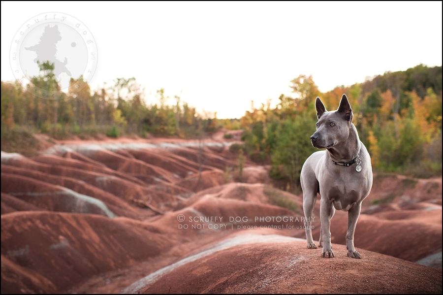 10 toronto ontario best pet photographer rogue mobi taylor-193