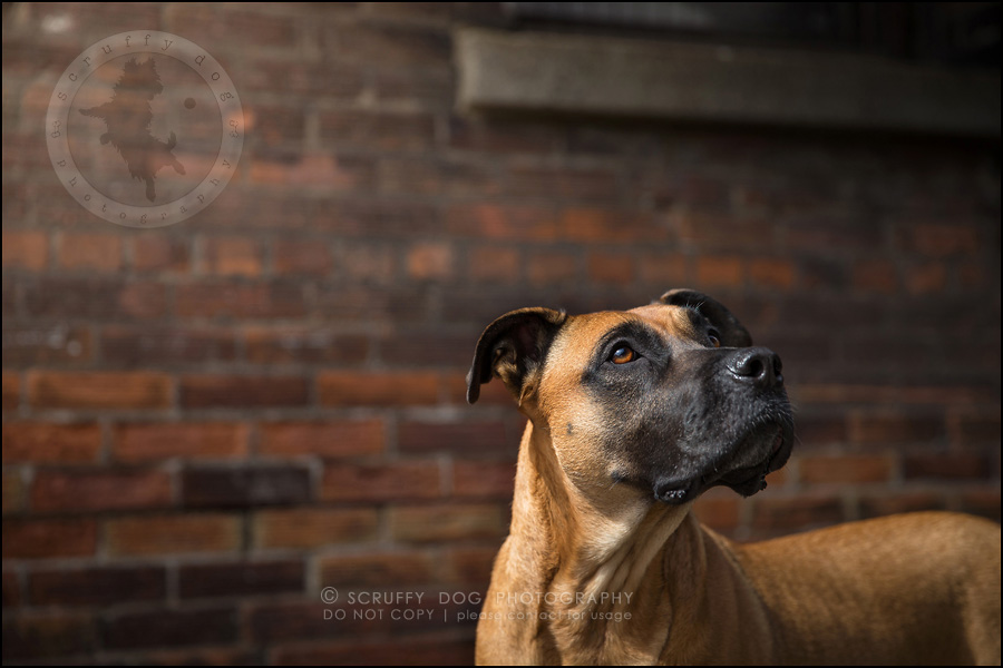 11 ontario premier commercial dog photographer kai mcintosh-8