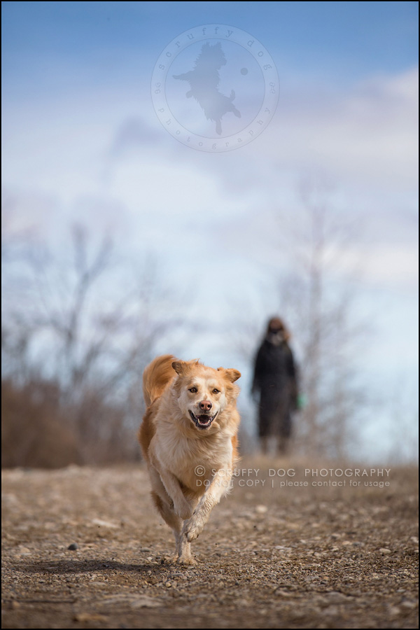 11 toronto modern dog photographer ginger perry-151