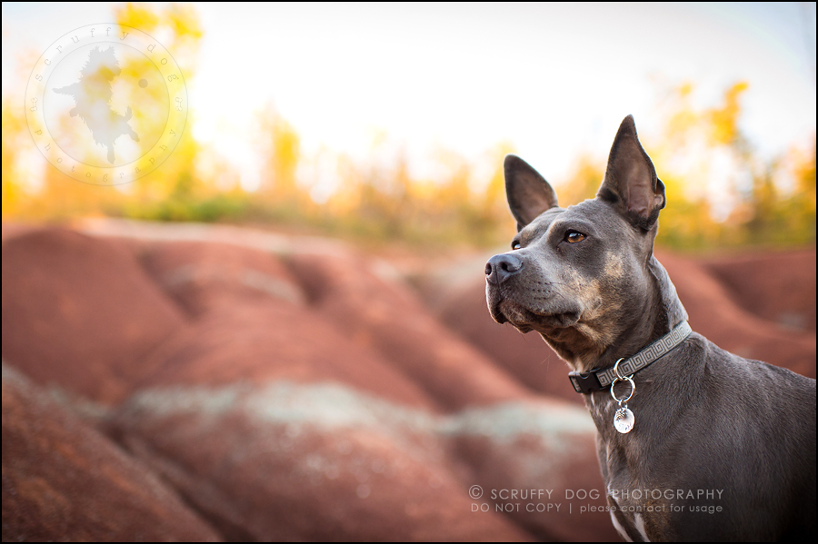 11 toronto ontario best pet photographer rogue mobi taylor-113