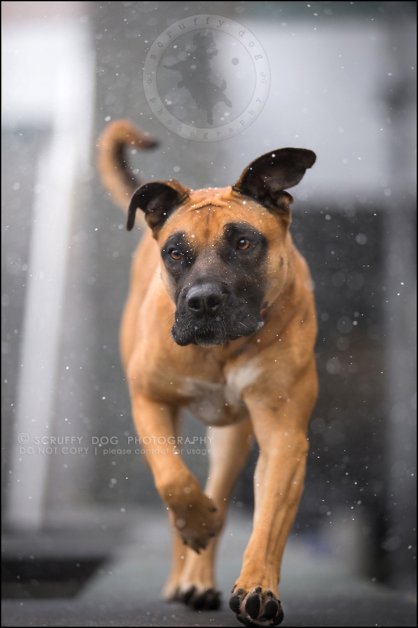 14 ontario premier commercial dog photographer kai mcintosh-404