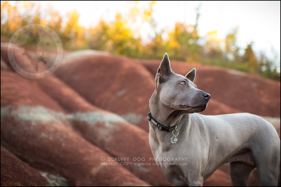 14 toronto ontario best pet photographer rogue mobi taylor-125