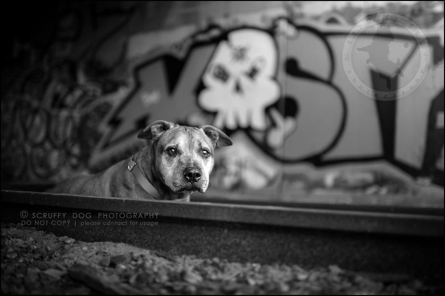 01 toronto best pet photographer buster gasman-23