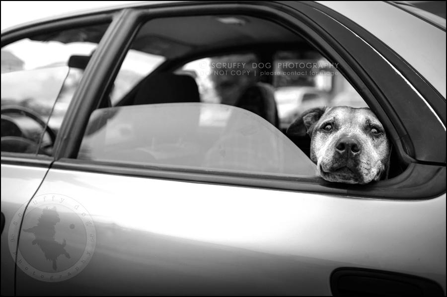 02 toronto best dog photographer buster gasman-351