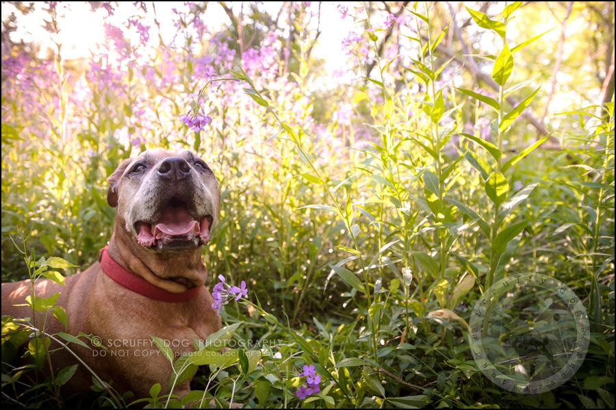 03 toronto best pet photographer buster gasman-139