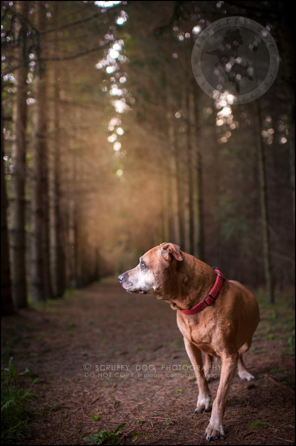 04 toronto best pet photographer buster gasman-194