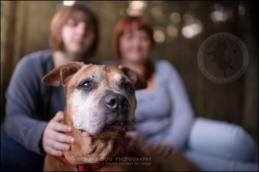 08 toronto best pet photographer buster gasman-263