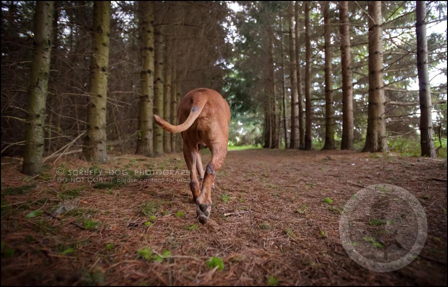 09 toronto best pet photographer buster gasman-292