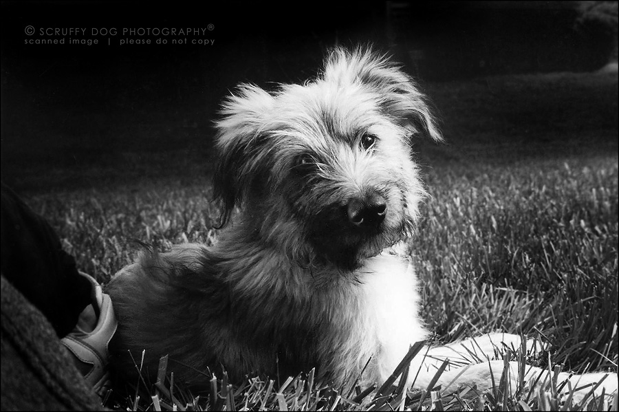 01 best ontario pet photographer murph bw