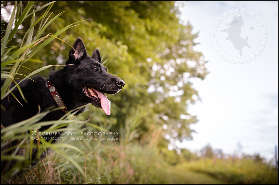 07 best toronto pet photographer maya blitz-1058