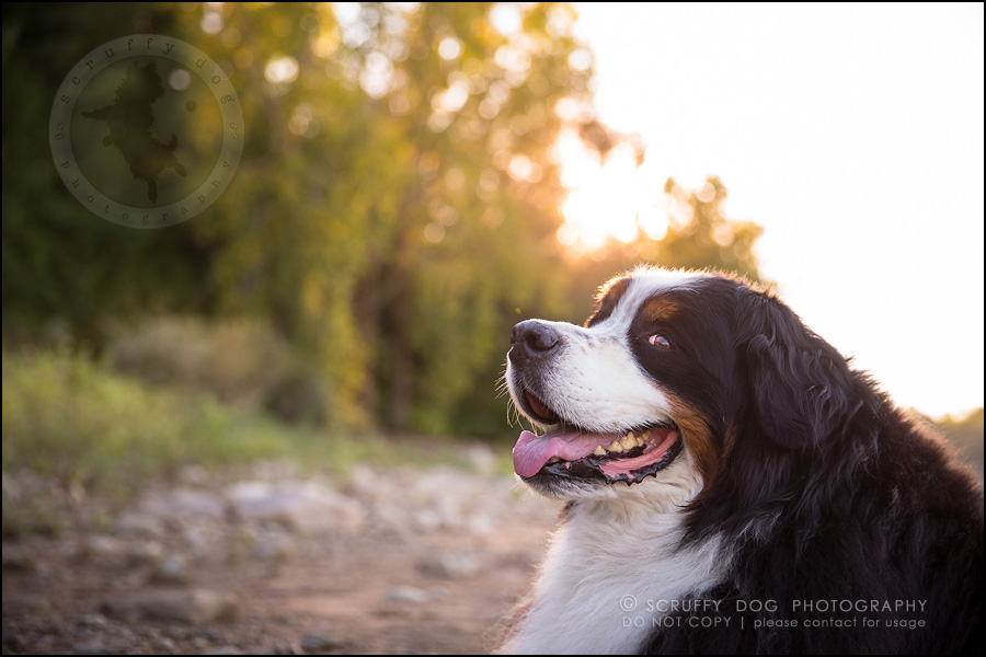 10 best pet photographer waterloo angus white-293