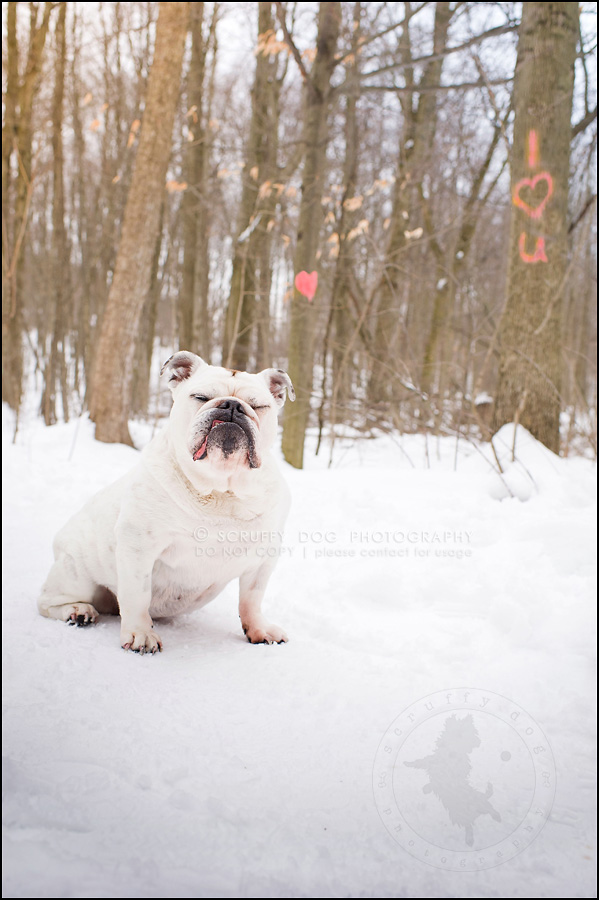 14guelph best pet photographer emma fleming-311-Edit