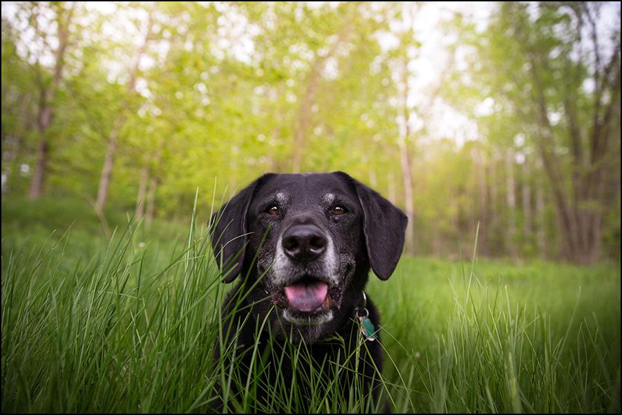 scruffy dog photography | award-winning professional pet ...