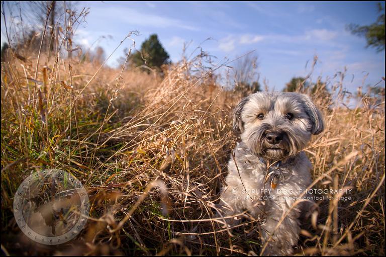 scruffy dog photography | award-winning professional pet