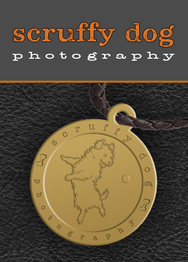 how to become a professional photographer toronto ocad